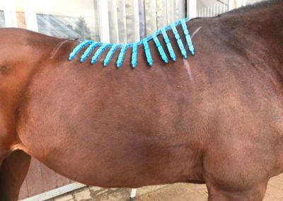 Equiscan - Vermessung eines Pferderückens