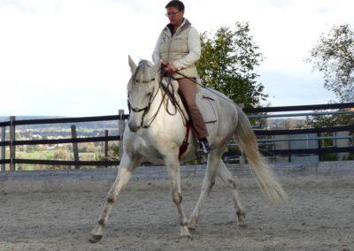 Seitengänge Lara Ree mit Pferd